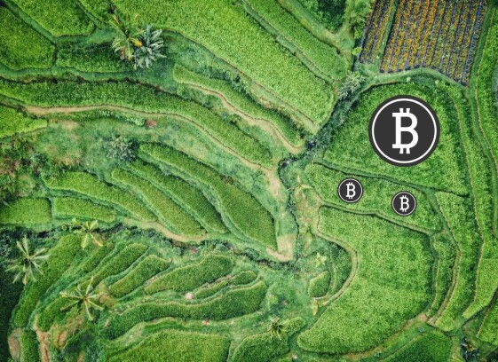 This is BTC Garden, one of my keys to passive crypto income.