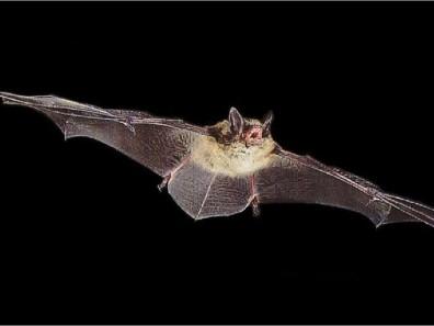 Trevor Balthrop BAT