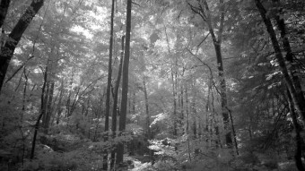 Sunlight on the forest floor - Infrared Photography
