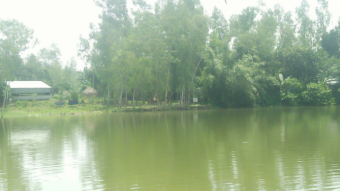 The pond is very beautiful