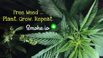 Free Unlimited Weed ... Plant Seeds.