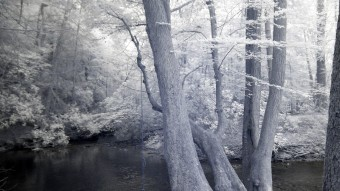 Rope swing on an old tree - Infrared Photography
