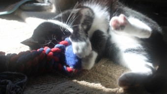 Walter playing with the dogs toy