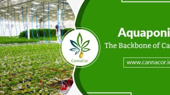 CANNACOR…Pioneer of Medical Cannabis Cultivation Through Aquaponic Technology