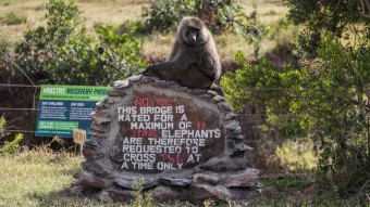 Exploring Ol Pajeta Conservancy, Kenya (Part 1)