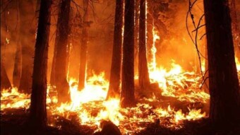 Amazon Rainforest is Burning Down!