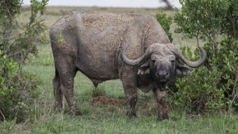 Exploring Ol Pajeta Conservancy, Kenya (Part 3)