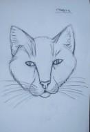 Kedi Kafası Çizimi / Draw a Cat Head