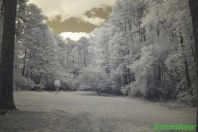 Infrared Photography - Tree filled lot with big clouds on the way