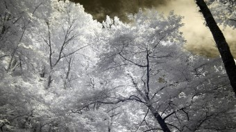 Leaning trees with the morning sky - Infrared Photography