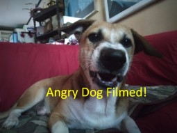 I Love Pets - Filming An Angry Dog Looking At Himself