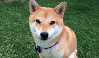 The Doge Story: Should We Talk Memes Or Market?