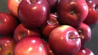 Organic Apples for $10 a bushel (125 apples)