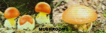 Mushrooms occurring in Europe - Lactarius scrobiculatus