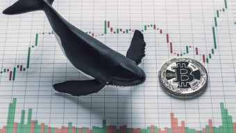 How To Recognize And Anticipate Whales Manipulation As Bitcoin Rises And Benefit Instantly