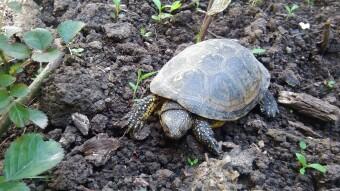 The Adventure of My Poor Turtle