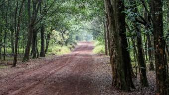 Serene Karura Forest In Nairobi, Kenya (Part 2)
