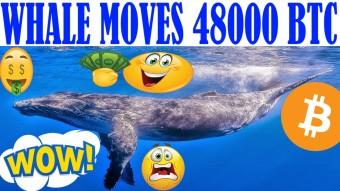 48000 BTC MEGA WHALE! - VIRAL: BTC ARTICLE! - VISA & RIPPLE - ARE WE DOOMED: PROOF OF KEYS THOUGHTS