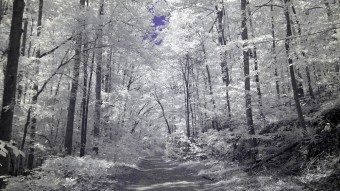 Walking down a Forest Service Road - Ultraviolet and Infrared Photography