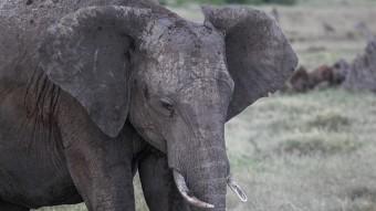 Exploring Ol Pajeta Conservancy, Kenya (Part 2)
