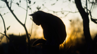Silhouettes of cat in the rays of the setting sun