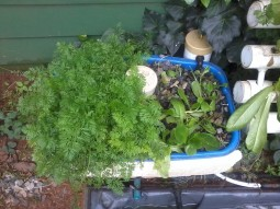 Aquaponics Mini hybrid garden system NFT/EBB and Flow!