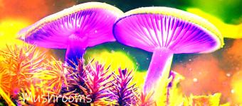 My trip around Indonesia - Sumatra - magic mushrooms in ...?