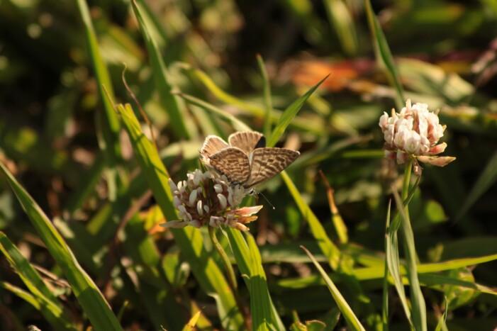 buuterfly