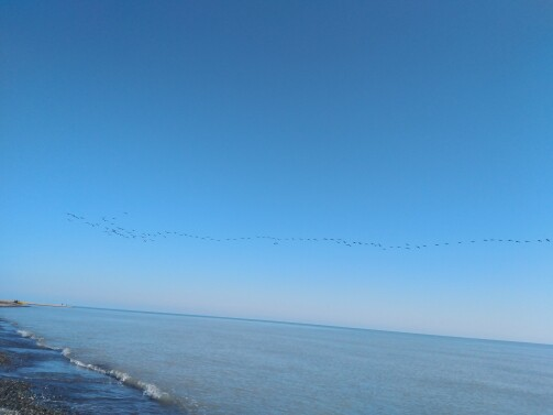 The Story of Cycling | As Migratory Birds Fly Over The Endless azure