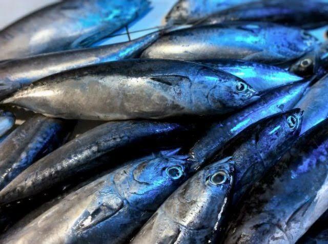 Tulingan(bullet tuna)