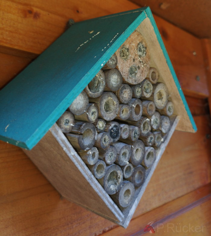 small purchased bee house