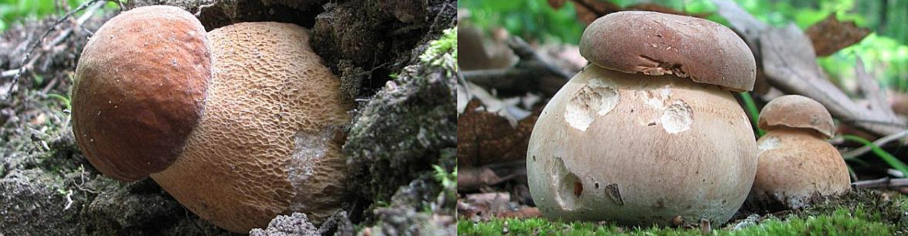 Nature - mushrooms