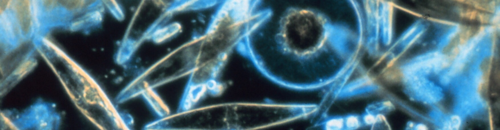 CryptoPlankton