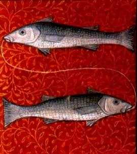Pisces basic