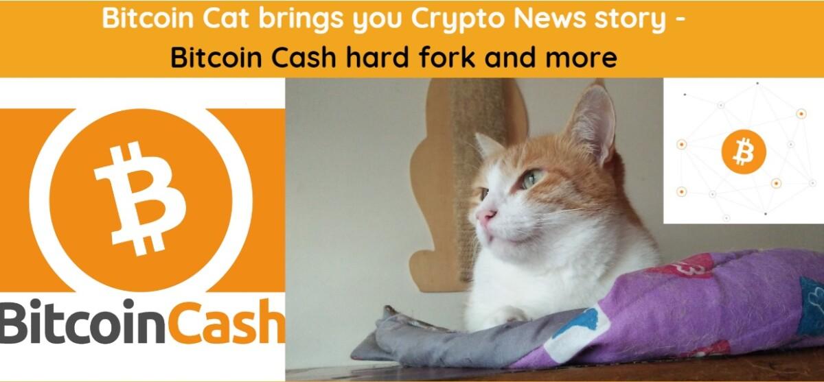 crypto, bitcoincash, hardfork, bitcoin