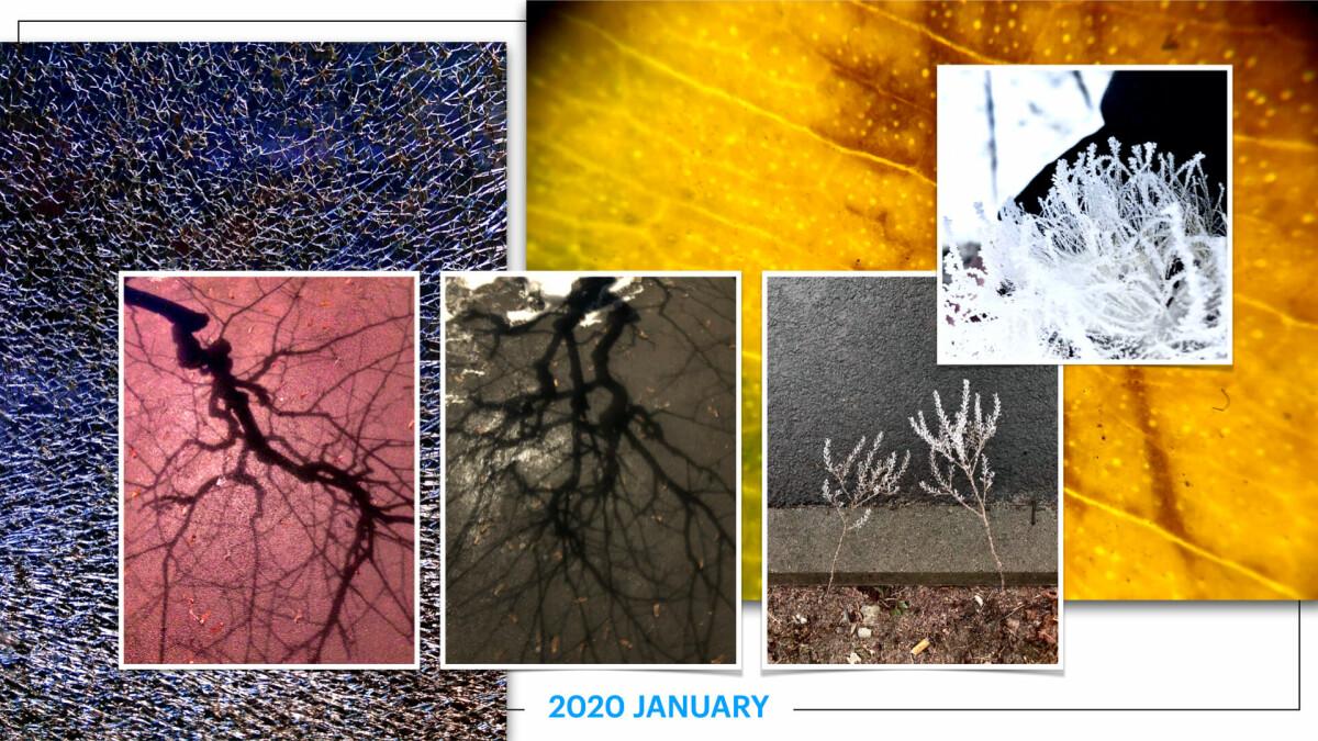 szbarnaus_2020_january