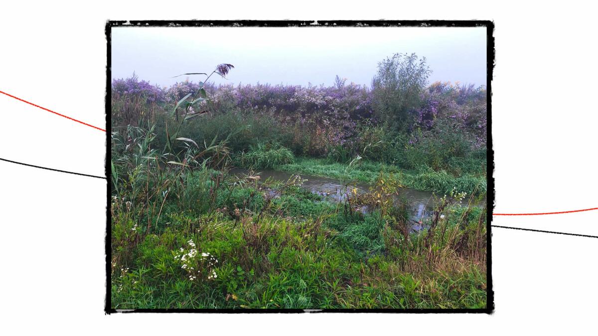 postcards from wasteland szbarnaus