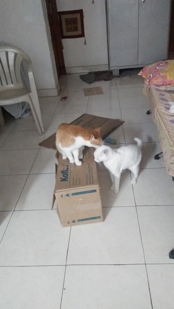 cat, pets, garu, mochu