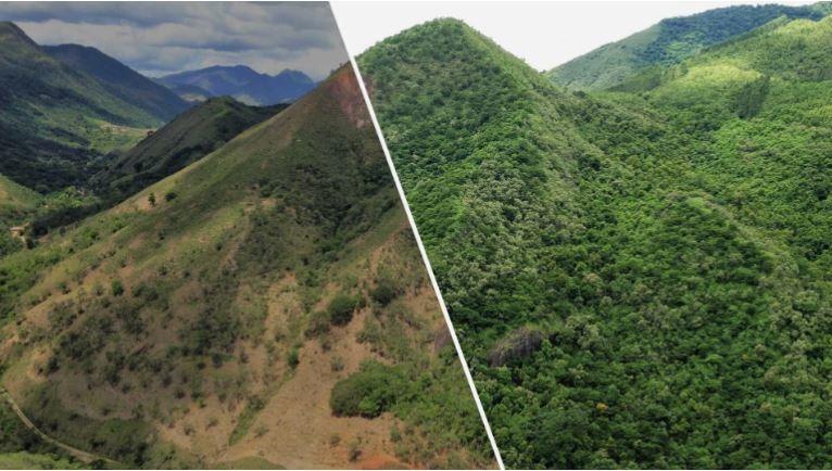 changes on the atlantic rainforest