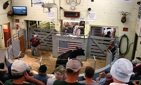 You  see, inspect and get what you pay for at Cattle Auction, Crypto needs to be the same ith honest Price Discovery, easier said then done