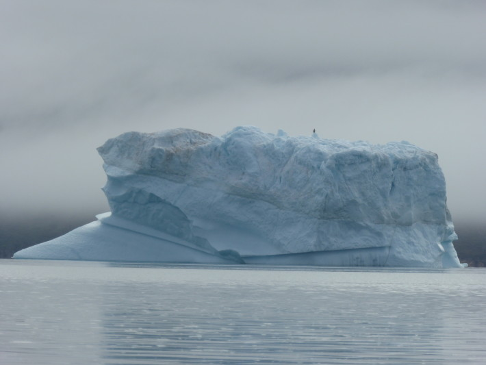 Sea eagle on iceberg