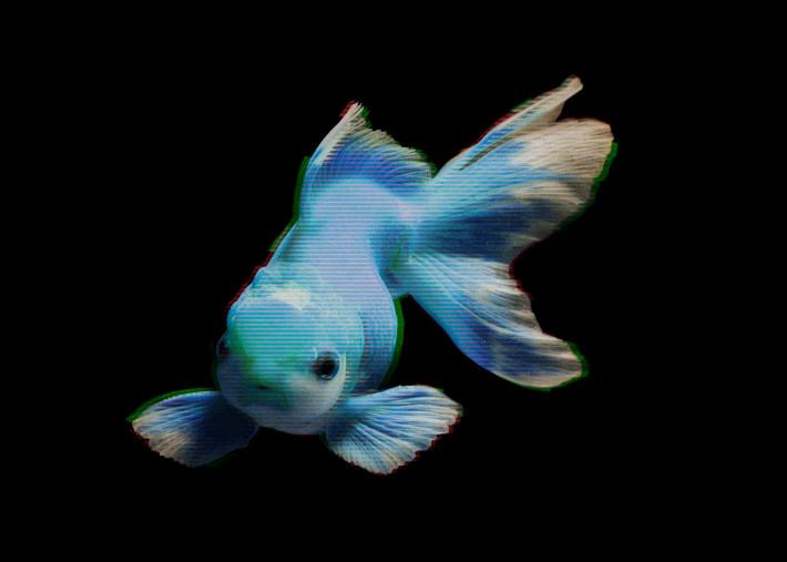 Blue Fish glitch art