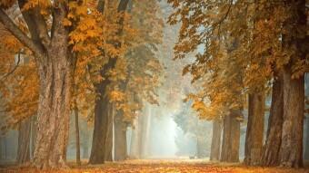 Arbitrum Autumn in L2 Landscape