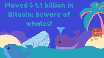 Moved $ 1.1 billion in BTC: beware of whales!