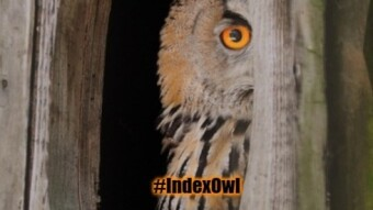 Index Coop DAO - Vox Populi, Vox Dei!