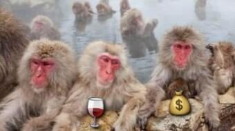 AP Wine and the DeFi Meme Decathlon - The final battle!