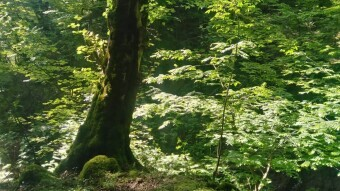 The Story of Pristine Nature, Soaring Trees & Exceptional Green Spring
