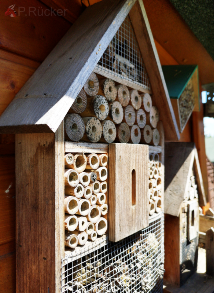 purchased bee home