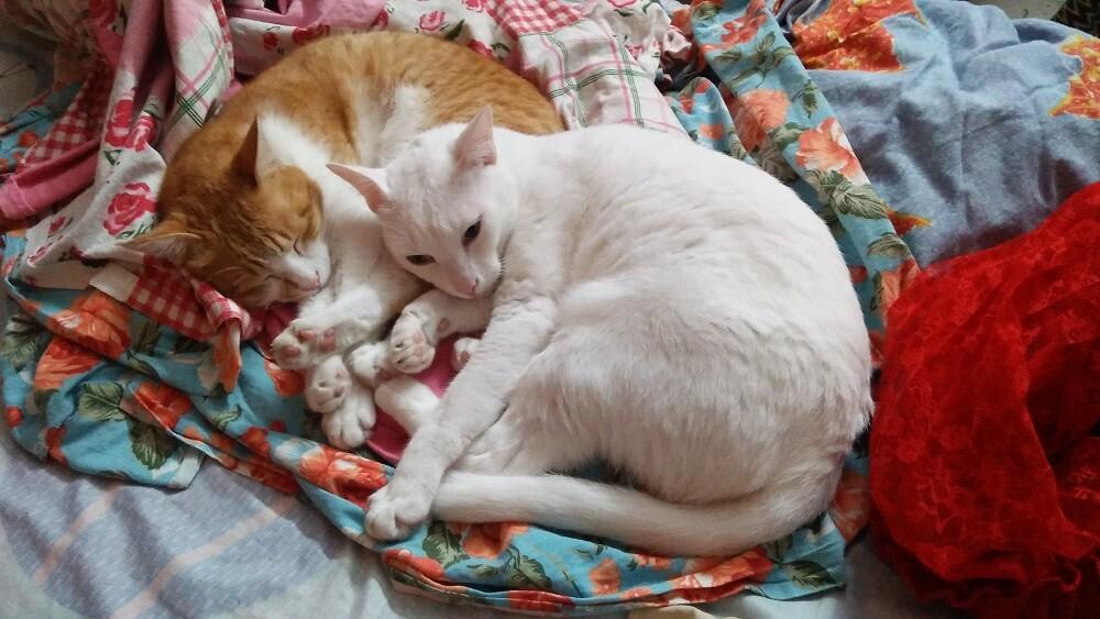cats, pets