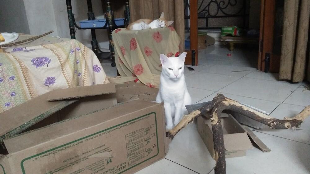 cat mochu, crypto, litecoin cat